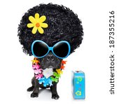 hippie dog of the seventies... | Shutterstock . vector #187355216