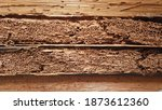 Small photo of Rotten damaged wood is eaten by termites because termites prefer to consume wood than iron or Light steel construction system