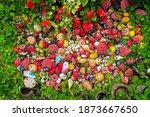 Stone Painted Colorful Ladybug...