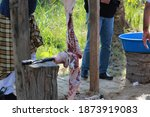 Animal Slaughter Is The Killing ...