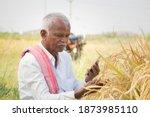 Farmer Busy Checking The Crop...