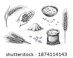 hand drawn wheat. cereal... | Shutterstock .eps vector #1874114143