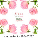 pink rose isolated on white... | Shutterstock . vector #187429520