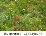 A Flower Garden Of Wildflowers...