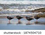 New Zealand Bird Variable...