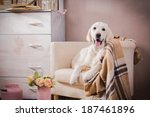 Stock photo cute golden retriever puppy 187461896