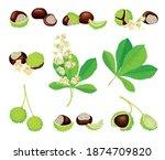 Horse Chestnut Or Aesculus...