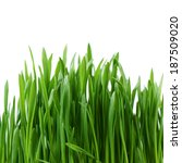The Green Grass Isolated On...