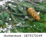 Christmas Banner. Spruce...