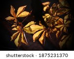 yellow leaves in the light of... | Shutterstock . vector #1875231370