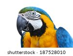 blue and yellow macaw  blue and ... | Shutterstock . vector #187528010