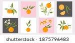mandarin poster set. exotic... | Shutterstock .eps vector #1875796483