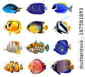 tropical fish | Shutterstock .eps vector #187581893