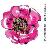Drawing Pink Anemone Flower For ...
