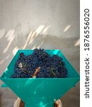 Blue Grape Crusher. The Old...