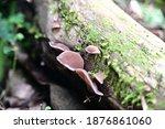 Wood Mushroom. Brown Wood...