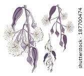 eucalyptus flower buds clip art | Shutterstock .eps vector #187700474