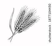 wheat barley spikelets hand... | Shutterstock .eps vector #1877104450