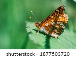 Coloured Butterfly Perched On A ...