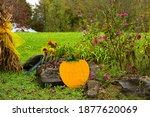 Cute Pumpkin And Flowers...