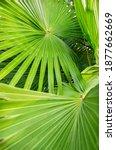 Tropical Palm Leaves Huge Green ...