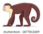 capucin monkey animal standing... | Shutterstock .eps vector #1877812609