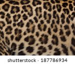 Jaguar  Leopard And Ocelot Ski...