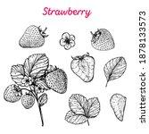 strawberry hand drawn vector... | Shutterstock .eps vector #1878133573