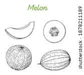 melon hand drawn vector... | Shutterstock .eps vector #1878211189
