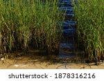 Tall Green Grass In Water ...