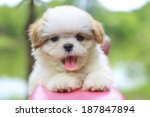 Stock photo cute puppy 187847894