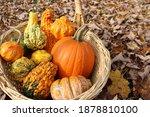 Ornamental Gourds Sitting In A...