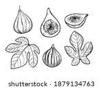 fig illustration. hand drawn... | Shutterstock .eps vector #1879134763