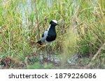 Black And White Water Bird...