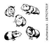 hand drawn guinea pigs. vector...   Shutterstock .eps vector #1879279219