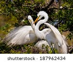 Two Great Egrets  One With A...