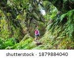 New Zealand Tropical Jungle...