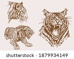 graphical vintage set of tigers ... | Shutterstock .eps vector #1879934149