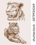 graphical vintage set of tigers ... | Shutterstock .eps vector #1879934269