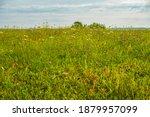 wild flowers meadow in summer | Shutterstock . vector #1879957099