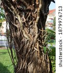Small photo of A tree is girdled when something is tightly wrapped around the trunk or stem