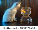 Ute Kitten Looks At A Fish In...
