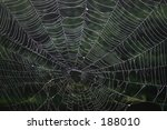 spider web | Shutterstock . vector #188010