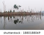 Flooded Dry Trees Reflected In...