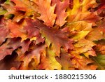 Autumn Background From Colorful ...