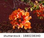 Bunch Of Bright Orange Flowers...