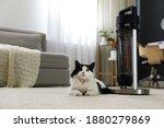 Cat Near Modern Electric...