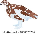 vector arctic partridge willow ptarmigan