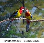 parrots | Shutterstock . vector #188089838