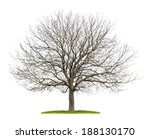 Isolated Walnut Tree In The...